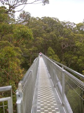 Tree Top Walk, Albany, WA