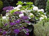 Bluehender Busch lila