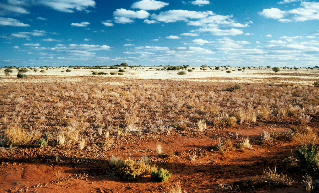 outback-nullarbor
