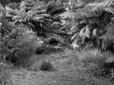 Sahra Island - Tasmanien