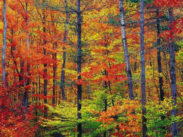 USA - New Hampshire - Indian Summer