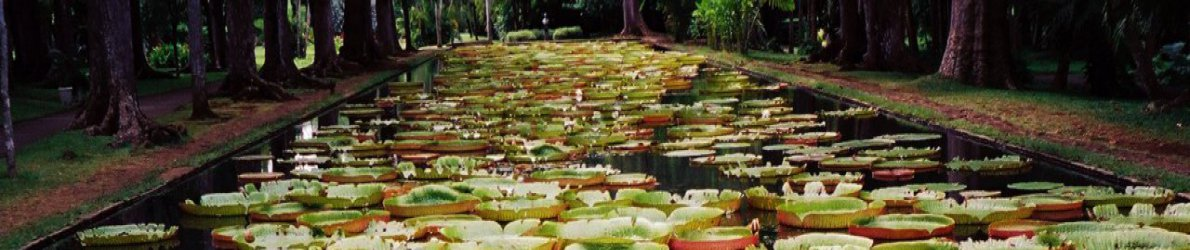 Botanischer Garten, Pampelmousse, Mauritius