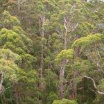 Tree Top Walk, Albany, Australien