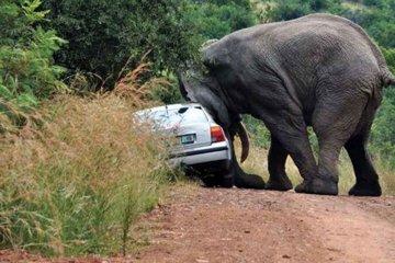 Tiere in Südafrika