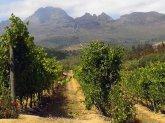 Wein aus Südafrika
