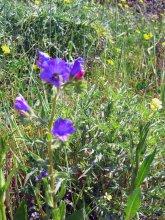 Sardinien Blumen