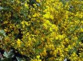 Sardinien-Blumen