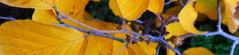 Ein Blatt gelb