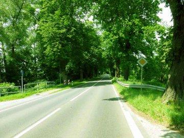 Mecklenburg-Vorpommern - Allee