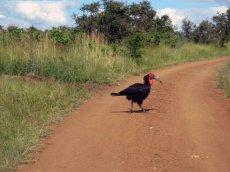 Tiere im Addo National Park