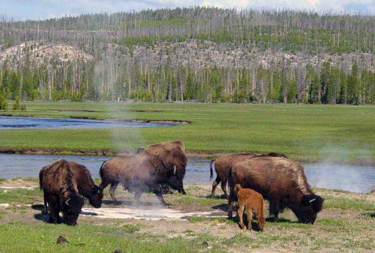 USA - Wyoming