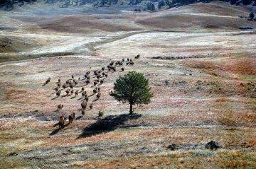 USA - South Dakota - Wind-Cave-Nationalpark