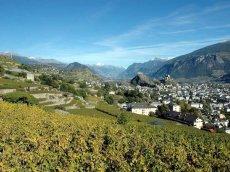 Schweiz - Wallis - Vignes Sion